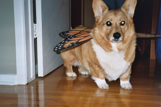 "Corgi and ""The Big C"""
